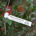 "Бирка ""петелька"" для маркировки растений 25х216 мм (1000шт.)"
